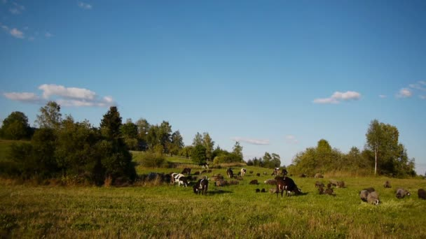 Herde Nutztiere weidet auf der grünen Wiese