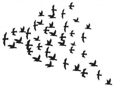 a flock of flying birds
