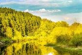Fotografia giorno di estate tranquilla sul fiume, immagine assolato paesaggio