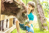 Photo outdoor portrait of young happy young boy feeding donkey on farm