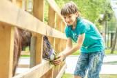 Fotografie venkovní portrét mladých šťastný mladík krmení oslí na farmě