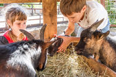 Photo two kids - boy and girl - taking care of domestic animals on far