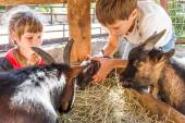 zwei Kinder - Jungen und Mädchen - die Pflege von Haustieren auf weit