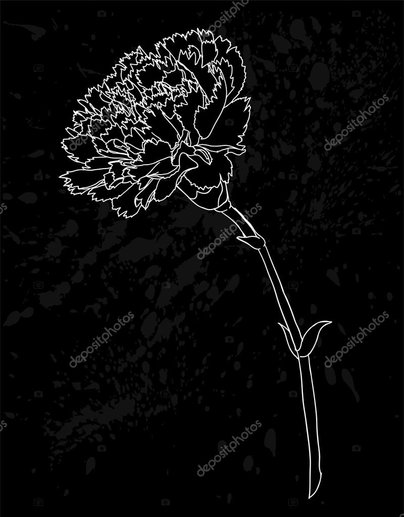 beautiful monochrome black and white carnation flower isolated on white background. Hand-drawn contour lines and strokes