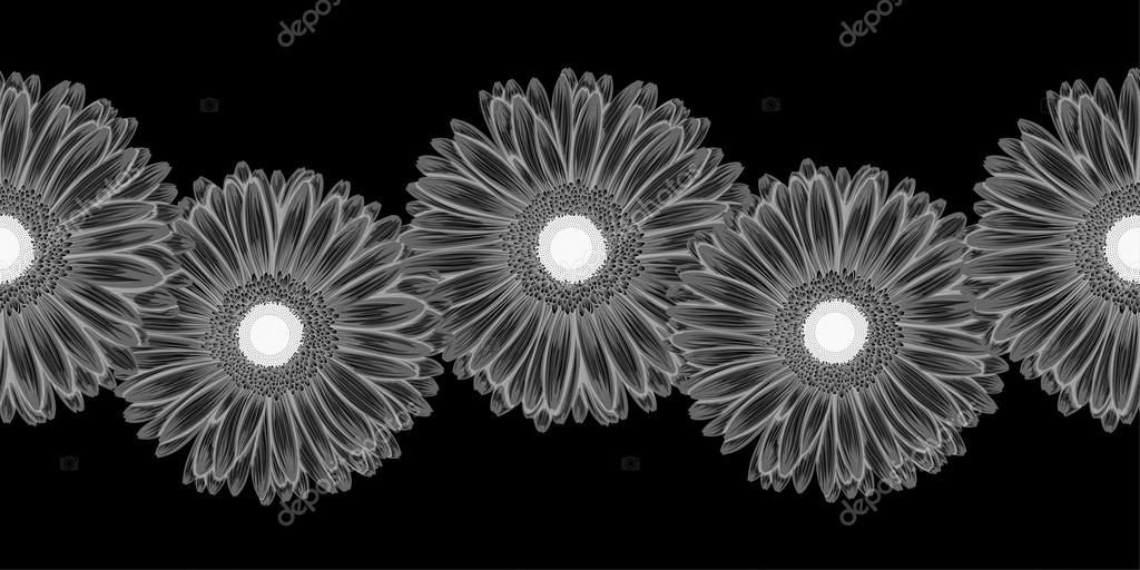 Beautiful monochrome, black and white seamless horizontal frame element of gerbera flowers.