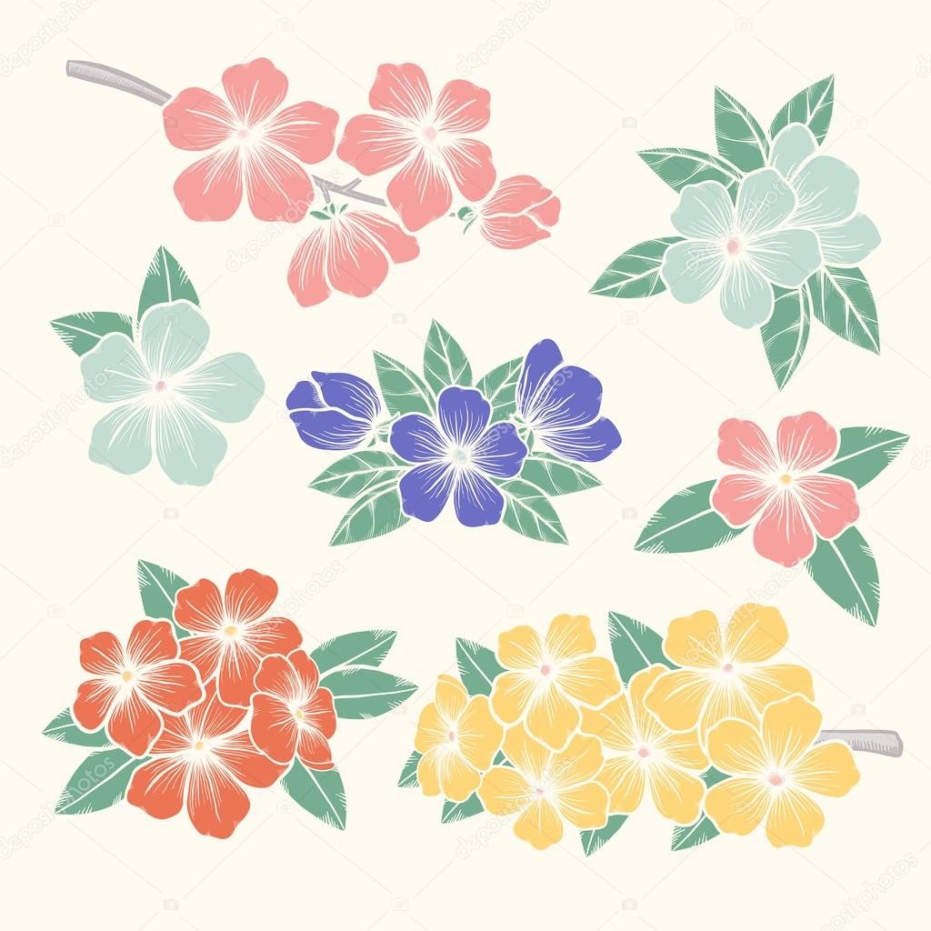 Vector Flowers Set Colorful Floral Collection With Leaves And