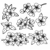 Fotografie Beautiful monochrome black and white floral collection with leaves and flowers.