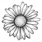 beautiful monochrome, black and white daisy flower isolated.