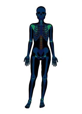 Woman x-ray skeleton. Vector flat illustration