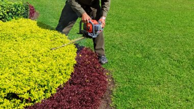 A man trimming shrub with Hedge Trimmer, Green grass copyspace