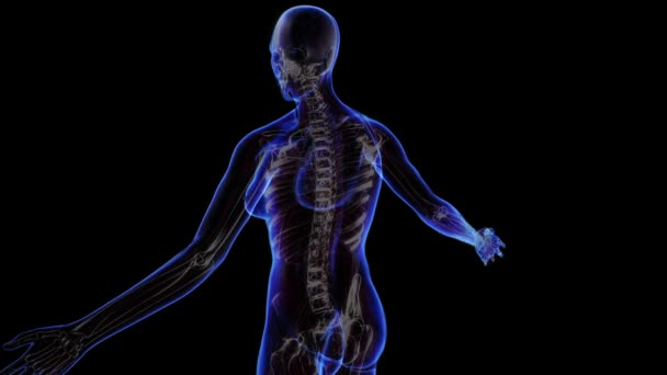 All human body systems. — Stock Video © SCHMaster73 #110134446
