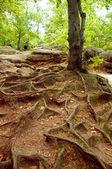 Ročník podzimní lesní horské stezce