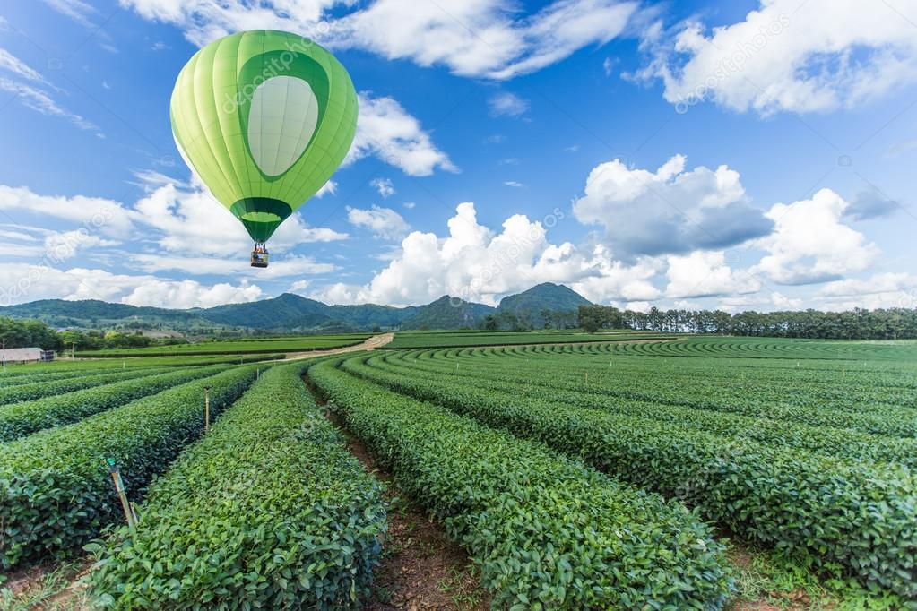 Hot air balloon over tea plantation