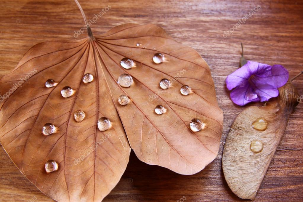 Low key image of Dry leaf with dewdrops on wooden background. selective focus