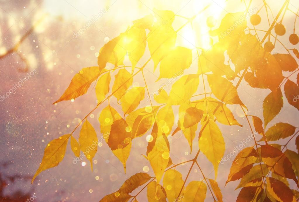 Image of fall leaves and light burst. filtered image