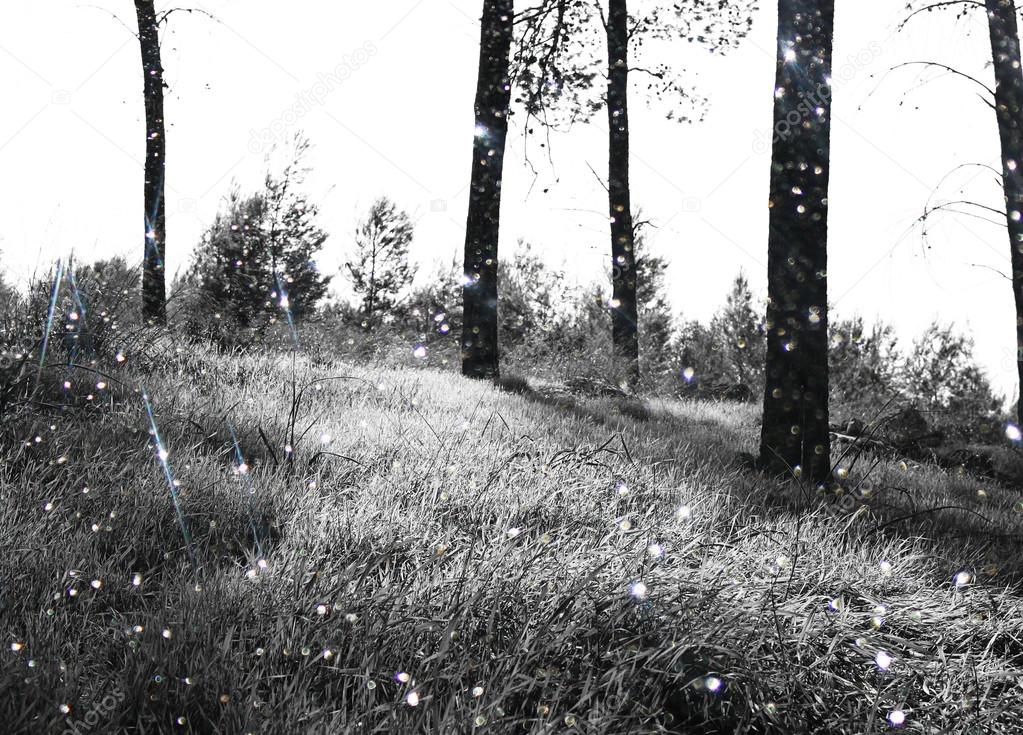 Abstract black and white trees in forest landscape and glitter bokeh lights