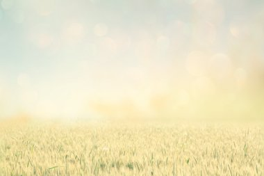 Abstract photo of wheat field and bright sky . instagram effect.