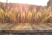 fa tábla előtt mező búza naplemente fény. Készen áll a termék bemutatására montázsok