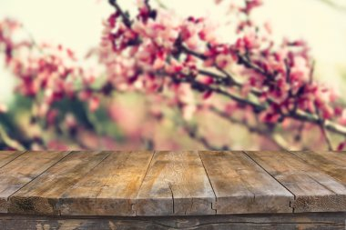 Image of Spring Cherry blossoms tree. retro filtered image, selective focus