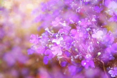 """Картина, постер, плакат, фотообои """"двойное воздействие розовых и фиолетовых цветов расцветает, создавая абстрактные и мечтательные фото цветы природа программа"""", артикул 72843553"""