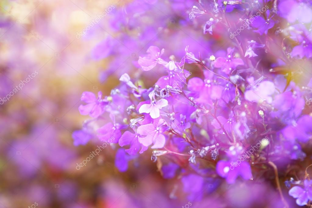 Double exposure of pink and purple flowers bloom, creating abstract and dreamy photo