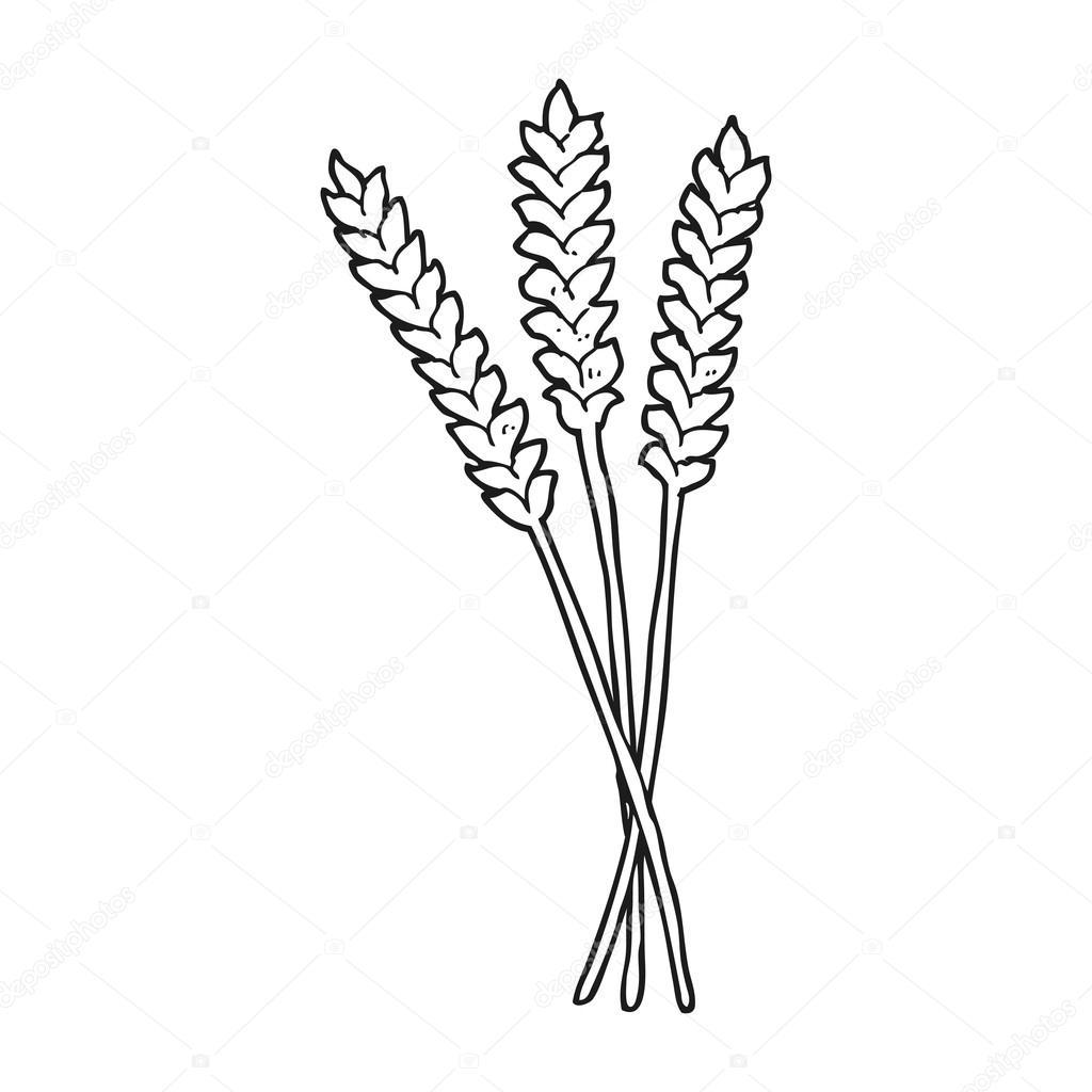 Siyah Beyaz çizgi Film Buğday Stok Vektör Lineartestpilot 101467944