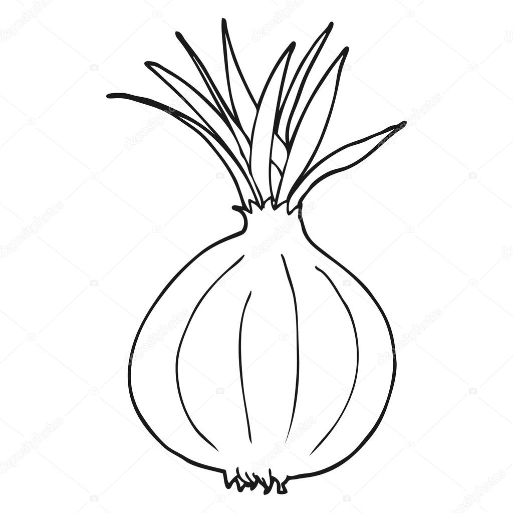 black and white cartoon onion — Stock Vector ...