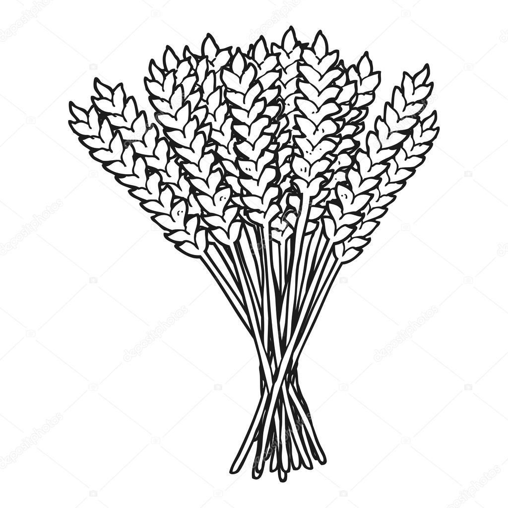 Siyah Beyaz çizgi Film Buğday Stok Vektör Lineartestpilot 96245276