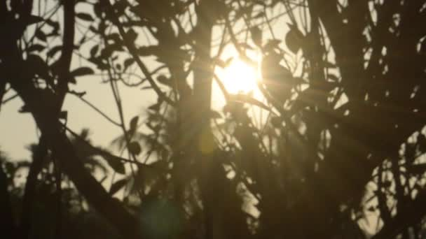 Morning Sunlight coming through tree leaves. Sun hiding behind the tree. Blur Forest Bush woodland environment in the foreground silhouette by back lit bright sunbeam. Beauty in nature Abstract Theme background B Roll footage.