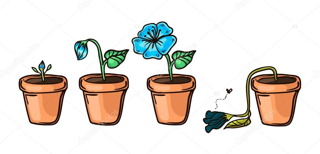 flower life cycle vector illustration