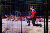 A lion tamer in the cage with tigers