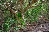 Mayské džungli