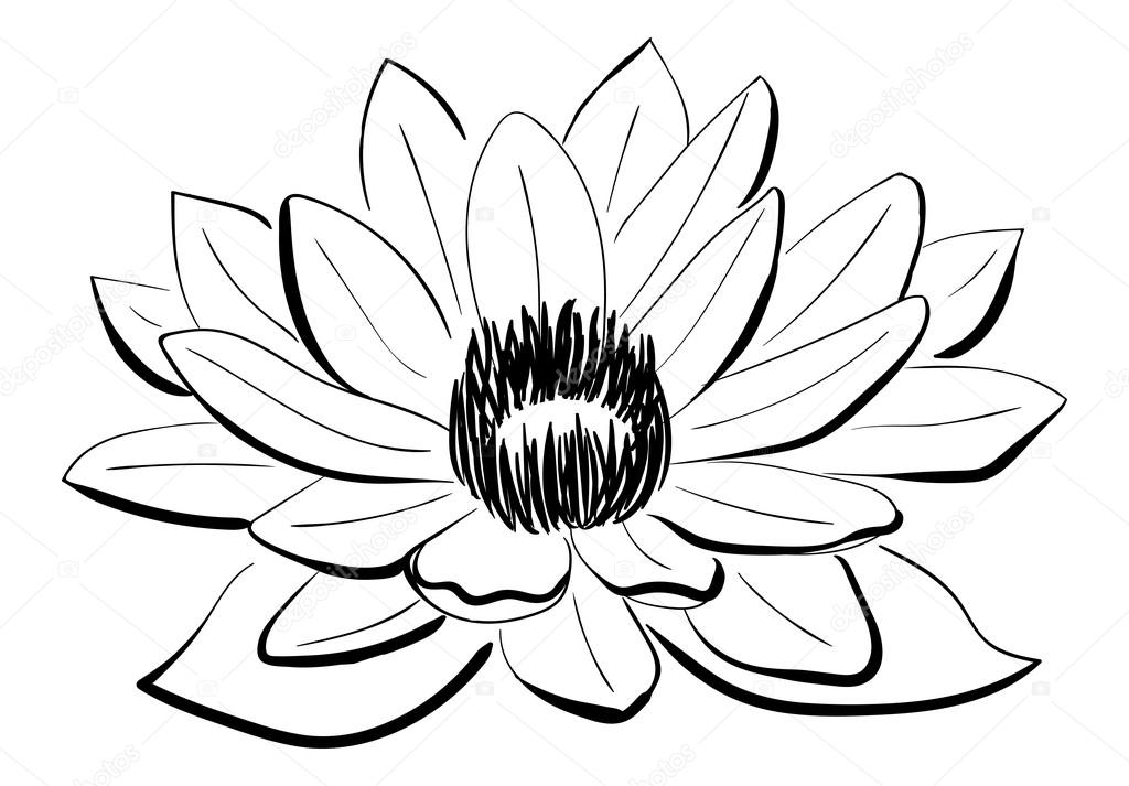 Vector black and white lotus flower stock vector