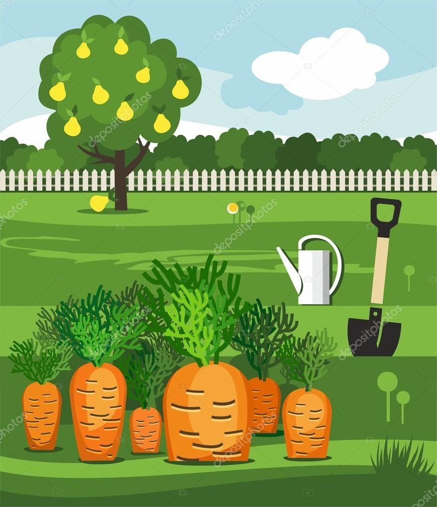 Carrots, vegetable garden, shovel and pear.