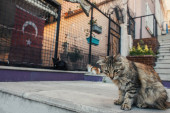 Homeless cat sitting on stair on urban street in Istanbul