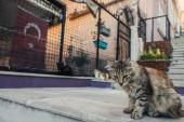 Kočka bez domova sedící na schodech na městské ulici v Istanbulu