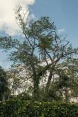 Nízký úhel pohledu na strom a rostliny s oblohou na pozadí