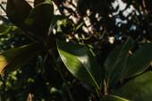 Zavřít pohled na zelené listy rostlin se slunečním světlem