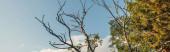 Nízký úhel pohledu na suché větve stromu s oblohou na pozadí, prapor