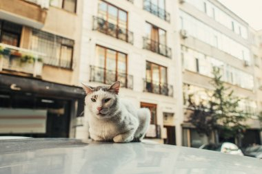 Cat sitting on roof of auto with street on blurred background stock vector