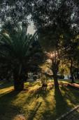 palmy a kaštany na travnatém trávníku v parku