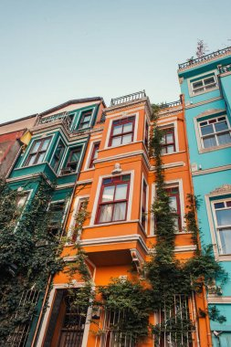 Low angle view of multicolored buildings with green ivy in Balat, Istanbul, Turkey stock vector