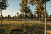 fiatal platánok ültetvényével rendelkező park