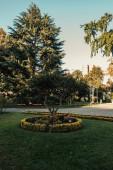 pávi v blízkosti boxwood keře pod stromem v parku