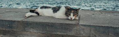 Homeless cat lying on border near sea, banner stock vector