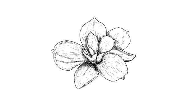 kézzel rajzolt animált gyönyörű magnólia fehér alapon.
