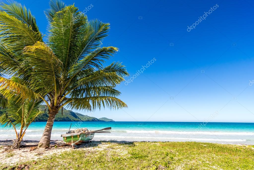 Boat by palm tree on one of the most beautiful tropical beaches in Caribbean, Playa Rincon, near Las Galeras, Dominican Republic