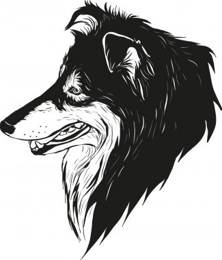 Sheltie shepherd dog