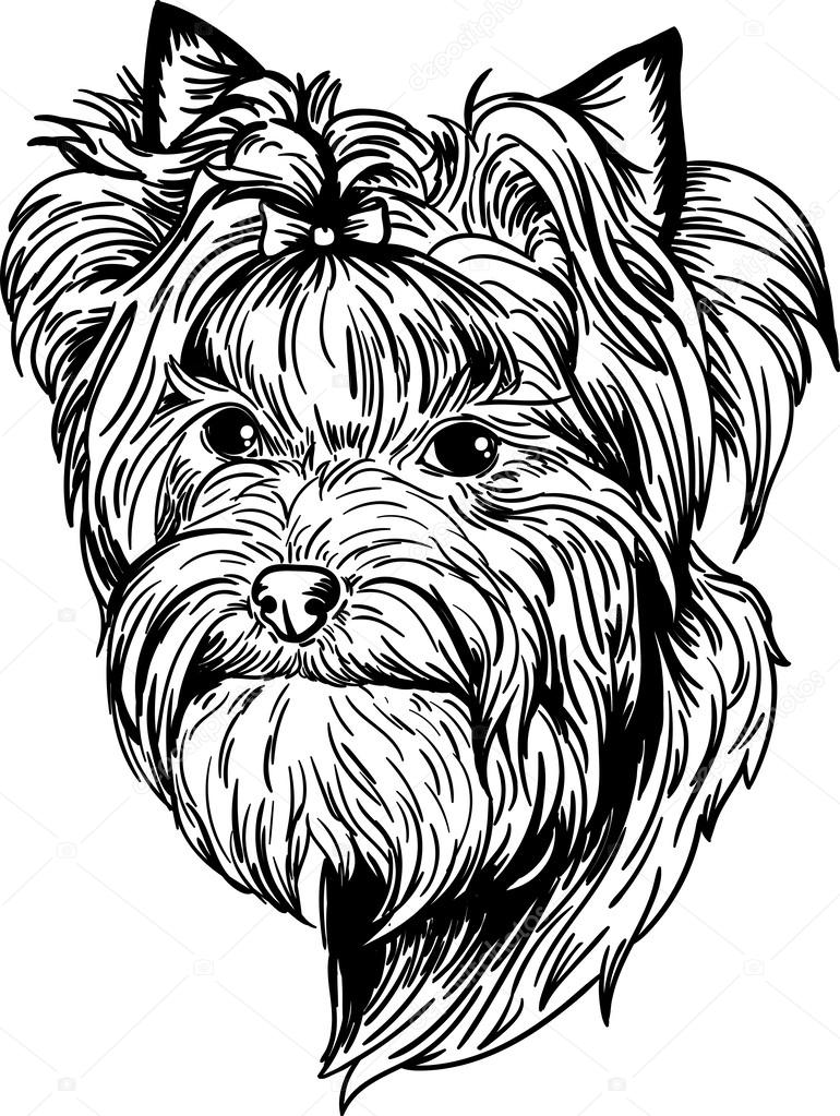 yorkie stock vectors royalty free yorkie illustrations
