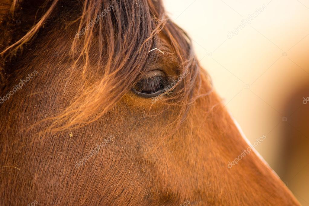 Cavalo selvagem rosto retrato oregon bureau de ordenamento do